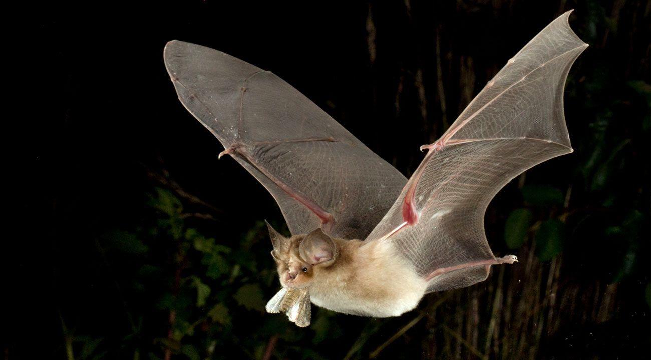 کشف%20ویروس%20کرونا%20در%20خفاشهای%20نعل%20اسبی